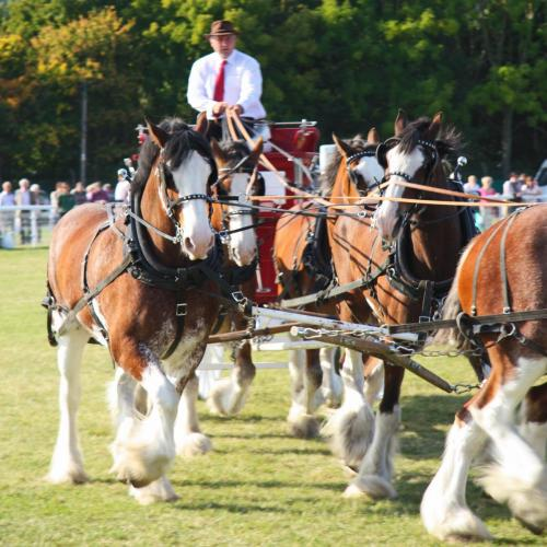 3 Counties Show Ground