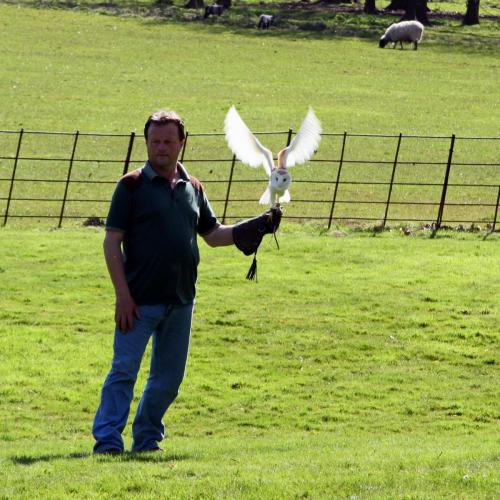 Birds of Prey at Ragley Hall